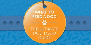 What To Feed A Dog: The Ultimate Dog Food Guide