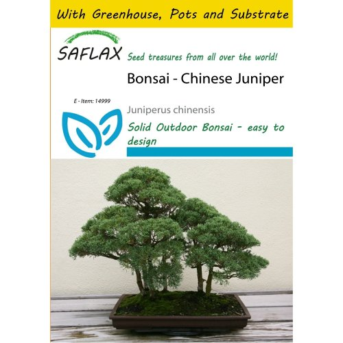Saflax Potting Set - Bonsai - Chinese Juniper - Juniperus Chinensis - 30 Seeds - with Mini Greenhouse, Potting Substrate and 2 Pots