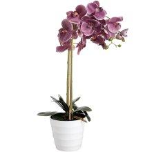 84cm Eternity Purple Burst Potted Orchid -  eternity purple burst potted orchid
