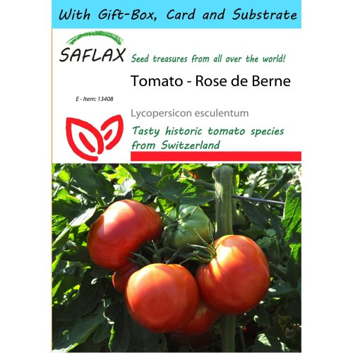 Saflax Gift Set - Tomato - Rose De Berne - Lycopersicon Esculentum - 10 Seeds - with Gift Box, Card, Label and Potting Substrate