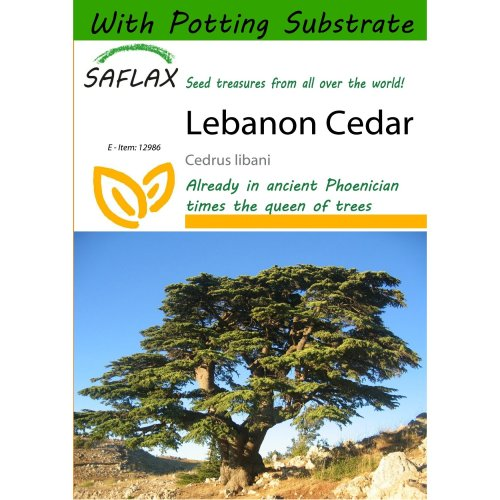 Saflax  - Lebanon Cedar - Cedrus Libani - 20 Seeds - with Potting Substrate for Better Cultivation