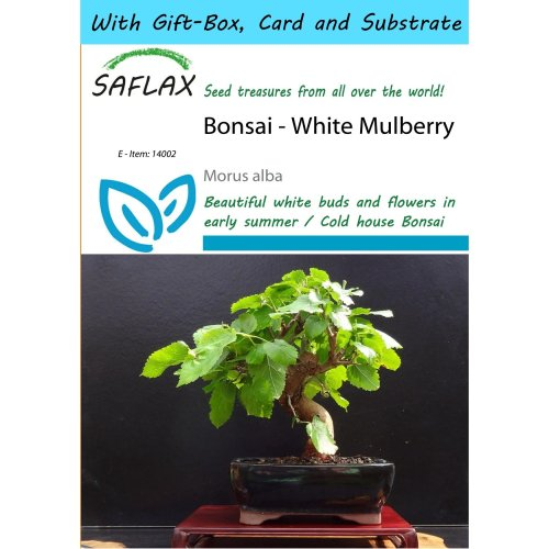 Saflax Gift Set - Bonsai - White Mulberry - Morus Alba - 200 Seeds - with Gift Box, Card, Label and Potting Substrate