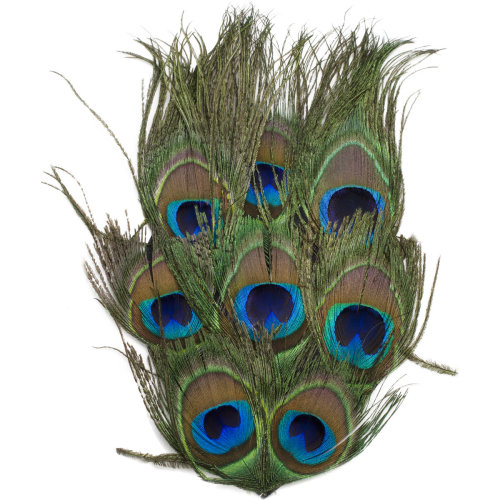 Peacock Eye Feather Pad-