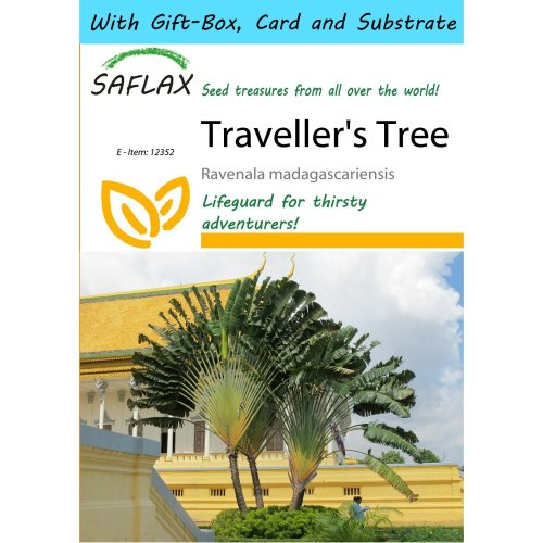 Saflax Gift Set - Traveller's Tree - Ravenala Madagascariensis - 8 Seeds - with Gift Box, Card, Label and Potting Substrate