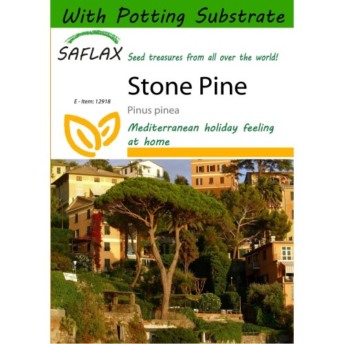 Saflax  - Stone Pine - Pinus Pinea - 6 Seeds - with Potting Substrate for Better Cultivation