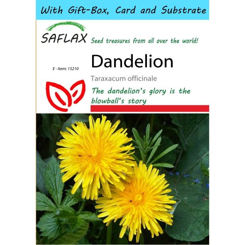 Saflax Gift Set - Dandelion - Taraxacum Officinale - 200 Seeds - with Gift Box, Card, Label and Potting Substrate