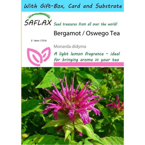 Saflax Gift Set - Bergamot / Oswego Tea - Monarda Didyma - 20 Seeds - with Gift Box, Card, Label and Potting Substrate