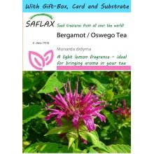 Saflax Gift Set - Bergamot / Oswego Tea - Monarda Didyma - 20 Seeds - with Gift Box, Card, Label and Potting Substrate