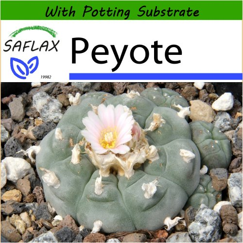 SAFLAX  - Peyote - Lophophora williamsii - 20 seeds - With potting substrate for better cultivation