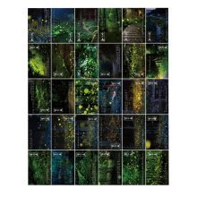 Stylish Post Cards for Collecting Glowworm and Forest Postcards